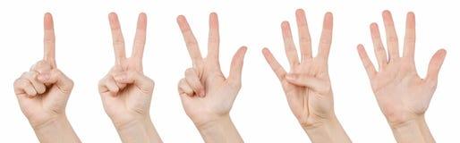Handzeichen, die von 1 bis 5 zählen Stockfotos