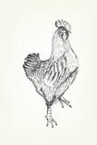 Handzeichnung eines Hahns Stockfotos