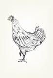 Handzeichnung eines Huhns Lizenzfreie Stockfotografie