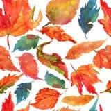 Handzeichnungsaquarellgelb-Herbstbirke verlässt Muster Stockfoto