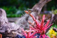 Hanekam, de zeer heldere roze kleurenbloem in de aard met het kleine schepsel op het of vlinder stock illustratie