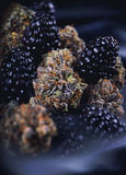 Hanf knospt Berry Noir-Belastung mit frischer Frucht - medizinisches Mrz Lizenzfreies Stockfoto