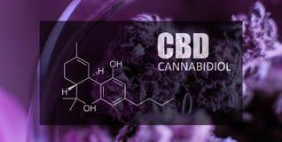 Hanf knospt Bild der Nahaufnahme der Formel CBD Heilendes Marihuanakonzept lizenzfreies stockbild