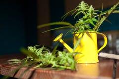Hanf pflanzt mit Gartenwerkzeugen Stockfotos