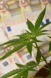 Hanf pflanzt und Geld von der Droge Stockbild