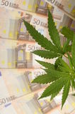 Hanf pflanzt und Lot von fünfzig Eurobanknoten Lizenzfreies Stockbild