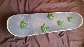 Hanf treibt eine Skateboardplattform Blätter lizenzfreie stockbilder