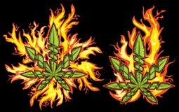Hanfhanfblatt in den wilden Feuerflammen Lizenzfreies Stockfoto