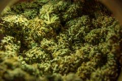 Hanfmarihuana-Sativaköpfe im Speicher