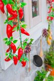 Hang chili vegetable food preservation royalty free stock images