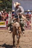 Hang on Cowboy Royalty Free Stock Photos