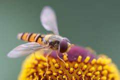 Hang de close-up van de Vlieg Royalty-vrije Stock Afbeeldingen