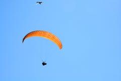 Hang Glider och Seagull Royaltyfri Bild