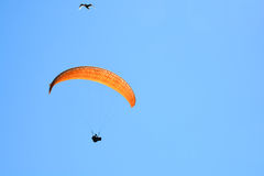Hang Glider and Seagull Royalty Free Stock Image
