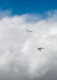 Hang Gliders and Storm Clouds Stock Image