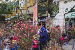 Hang Luoc Flower Market Flores del melocotón, ha Noi Vietnam foto de archivo