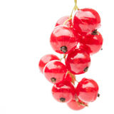 Hang red currant Stock Photography