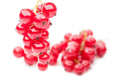 Hang red currant Stock Photo