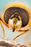 Hang Vlieg, Bloemvliegen, Syrphid-Vliegen, Hoverflies, Diptera, Syrphidae royalty-vrije stock foto's