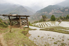 Hangar dans le domaine de riz Image stock