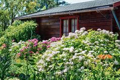 Hangar de jardin entouré par de beaux hortensias et othe de floraison Photo libre de droits