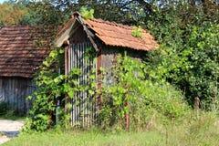 Hangar de maïs utilisé pour sécher et stocker des épis de maïs faits à partir des conseils en bois étroits complètement envahis a photographie stock