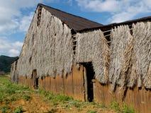 Hangar for drying tobacco. Royalty Free Stock Photo