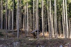 Hangar en bois dans la forêt Photographie stock libre de droits