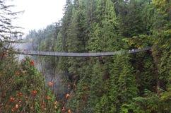 Hangbrug in bos Stock Foto's
