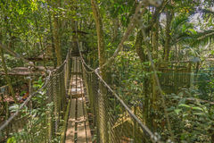 Hangbrug in het bos Stock Afbeeldingen