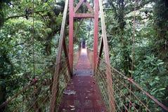 Hangbrug in regenwoud Stock Foto
