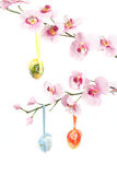 Hanged bright color easter eggs with bows on spring flower Royalty Free Stock Image