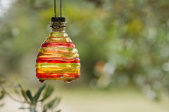 Hanged colored bottle. Hanged colored wasp trap bottle on an olive tree in provence Royalty Free Stock Photo
