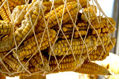 Hanged Dry Organic Corns Stock Photography