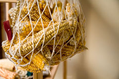 Hanged Dry Organic Corns In A Net Stock Photography