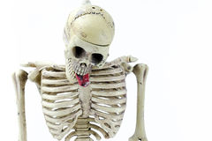 Hanged skeleton model on white background Stock Photos