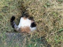 Hangend dierenartsbezoek - kat het verbergen in lange grasknipsels stock fotografie