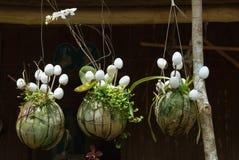 Hangende Aziatische houseplants Stock Foto's