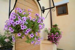 Hangende bloem Stock Foto
