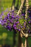 Hangende bloemen Stock Afbeeldingen