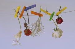 Hangende bloemen Artistieke foto Royalty-vrije Stock Fotografie