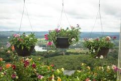 Hangende bloemen bij de ingang aan het restaurant Stock Foto's