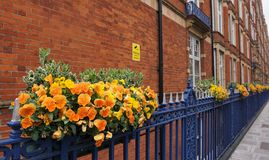 Hangende Bloemen door de Omheining Royalty-vrije Stock Foto