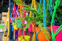 Hangende bloemen in kleurrijke potten Royalty-vrije Stock Afbeelding