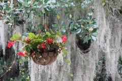 Hangende bloemen met Spaans Mos Stock Afbeeldingen