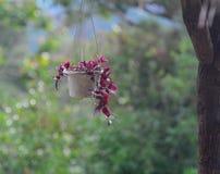 Hangende bloemen op aardachtergrond Royalty-vrije Stock Fotografie