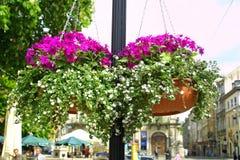 Hangende bloemen op een straat Stock Foto