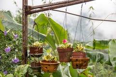 Hangende bloemen in potten buiten Royalty-vrije Stock Fotografie