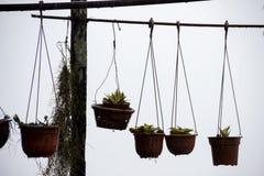 Hangende bloemen in potten buiten Stock Afbeelding