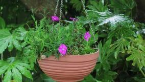 Hangende bloemmand met roze Petunia stock video